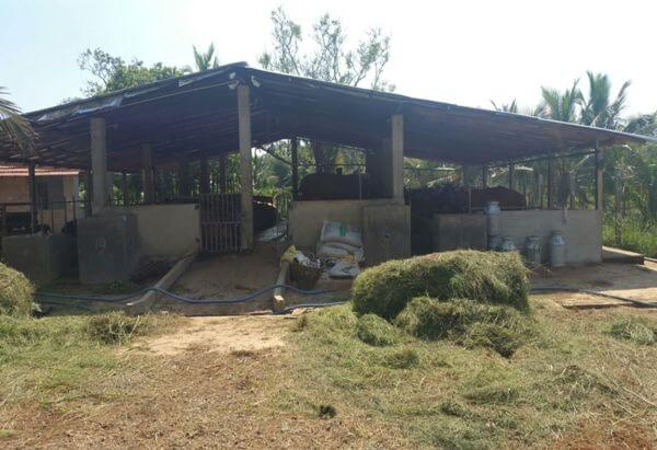 BFL-Cattle Farm, Chilaw
