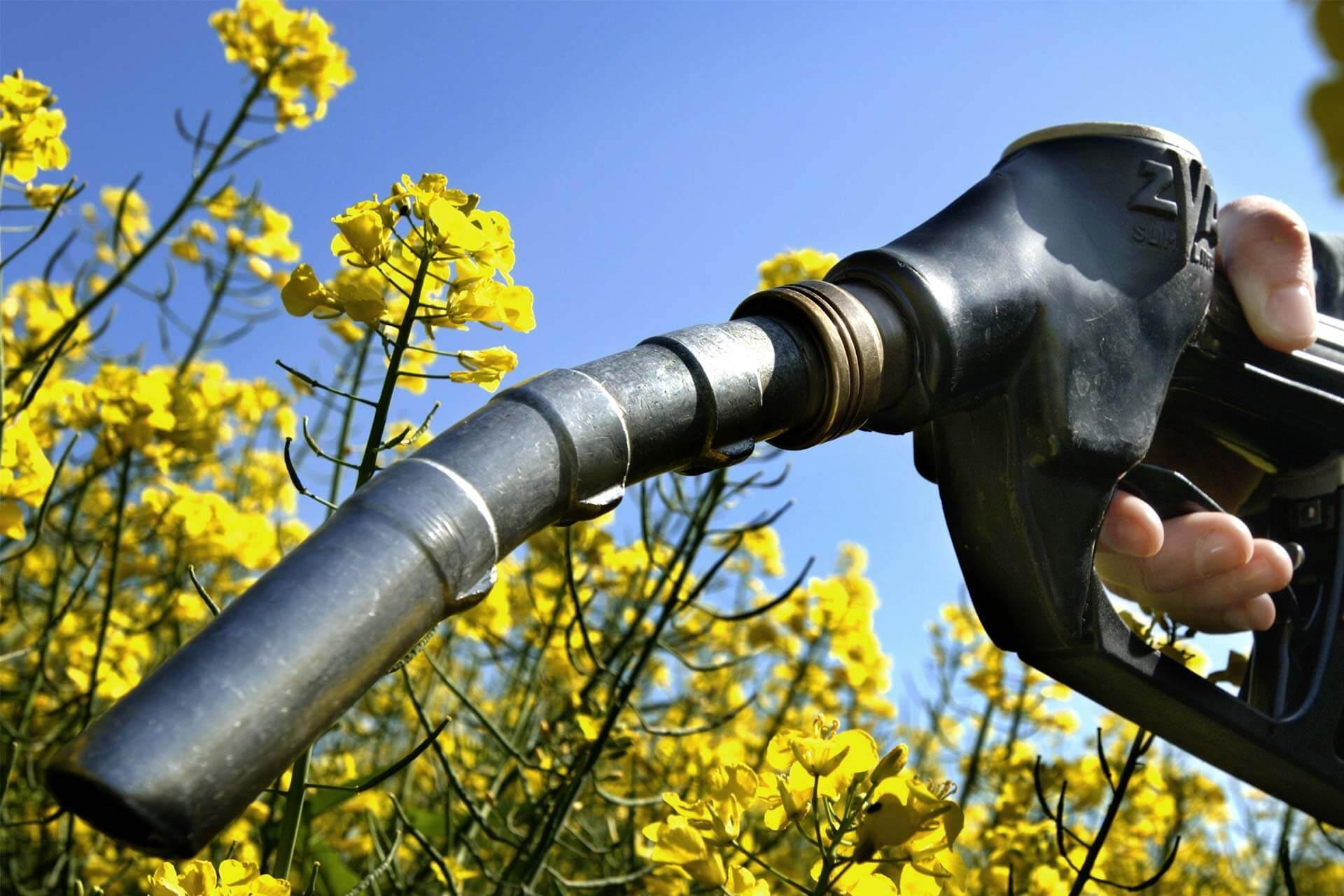 Biodiesel Energy